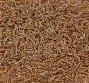 Rice Hulls Whole -web
